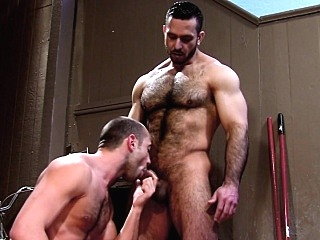 Muscled bear ram and jizz bears (gay) blowjob (gay) cumshot (gay)